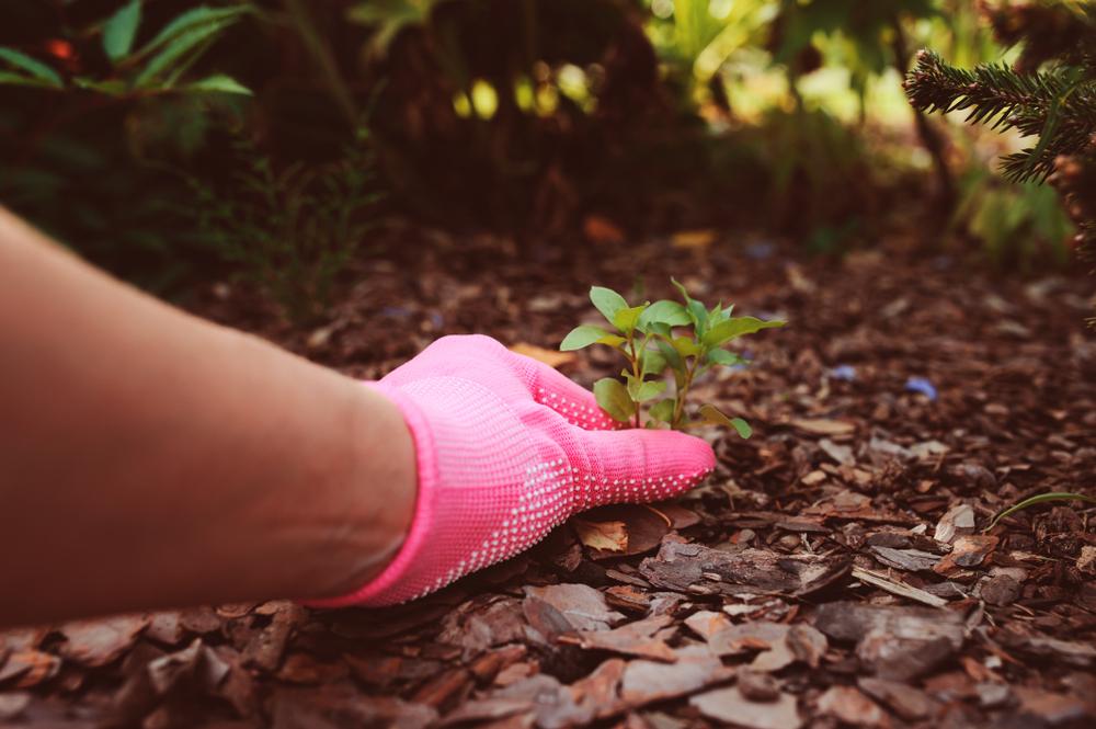 Tuinieren is gezond